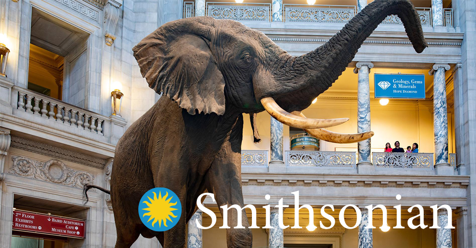 Smithsonian Natural History Elephant