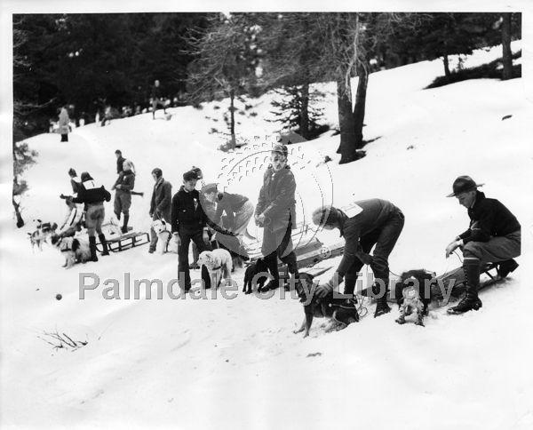 Children and their dogs sleding in the snow